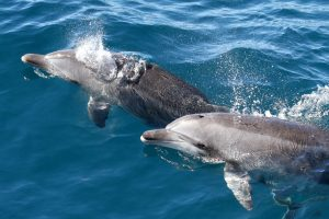 See the Dolphins