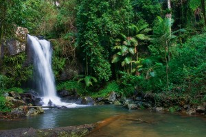 Curtis-Falls-Tamborine-Mountain