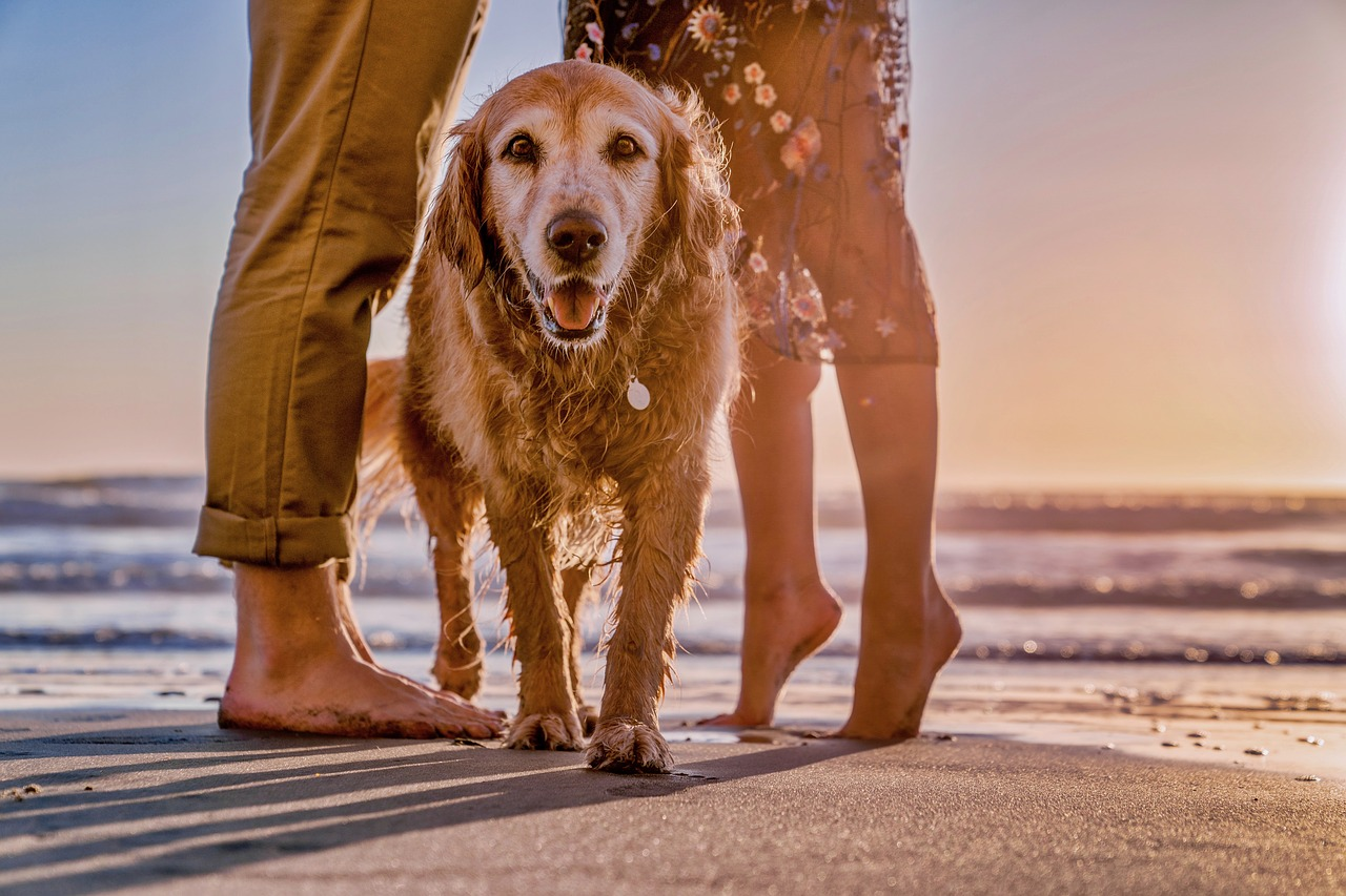 Pet friendly vacations on the Gold Coast | Relax and enjoy the sun