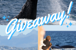 🐋 WIN! Whale Watching Experience 🐋